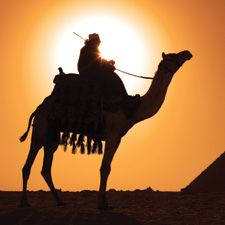 Ride a camel - M