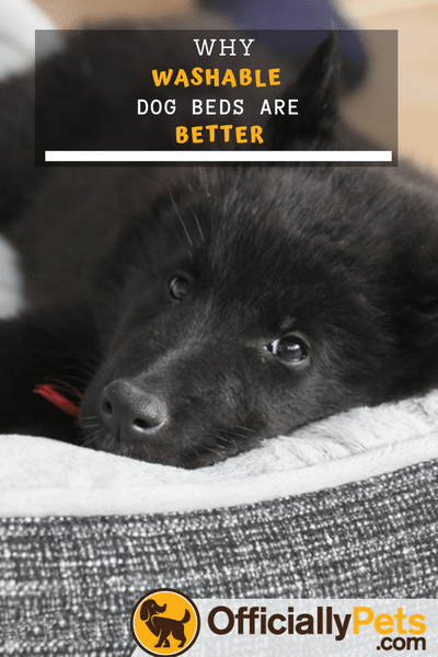 The 5 Best Washable Dog Beds Getting a dog bed is pretty