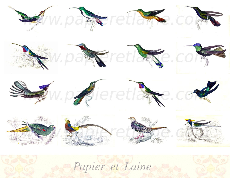 digital collage sheet colourful birds 2 printable download jpeg file 300dpi by papieretlaine - Printable Bird Pictures 2