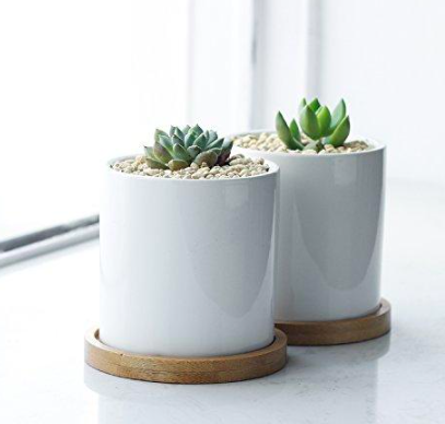 Greenaholics Succulent Plant Pots 3 Inch Ceramic Cylindrical Containers Small Cactus Planters Flower Pots With Drainage Hole Bamboo Tray Planting Succulents Flower Pots Small Cactus Plants
