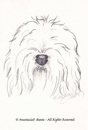 Matted Bearded Collie Dog Art Print P//L
