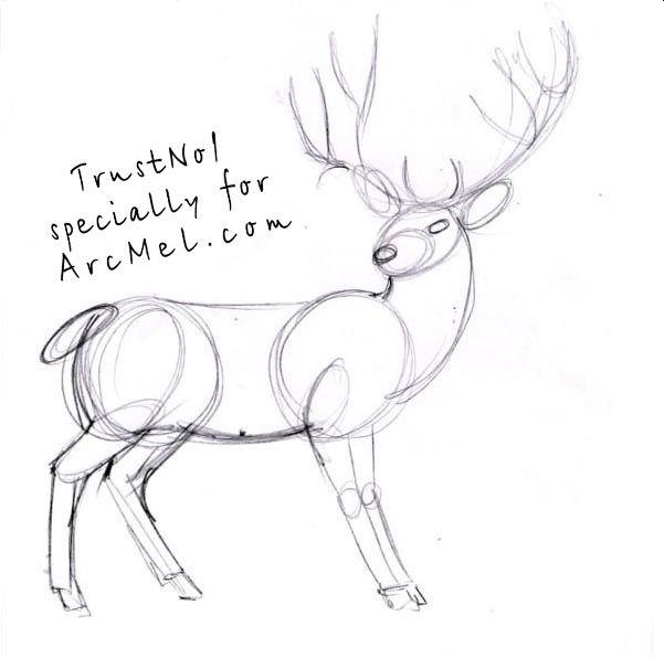 How to draw a deer step 3   Crafts & art   Pinterest   Craft art