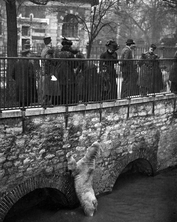 the great flood of paris 1910 an escaped bear from the zoo tries