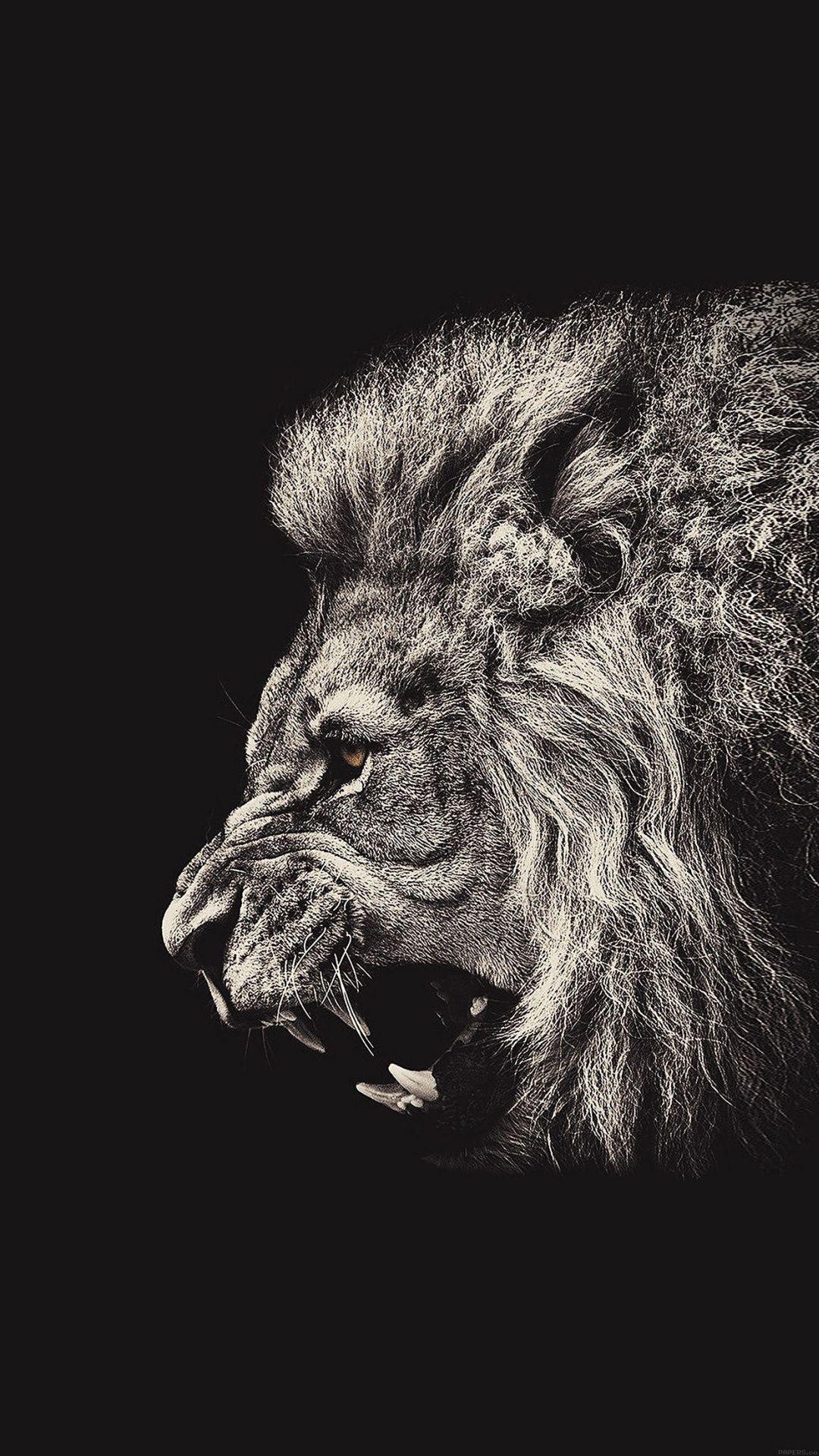 Wallpaper iphone lion - Male Lion Portrait Iphone 6 Plus Hd Wallpaper