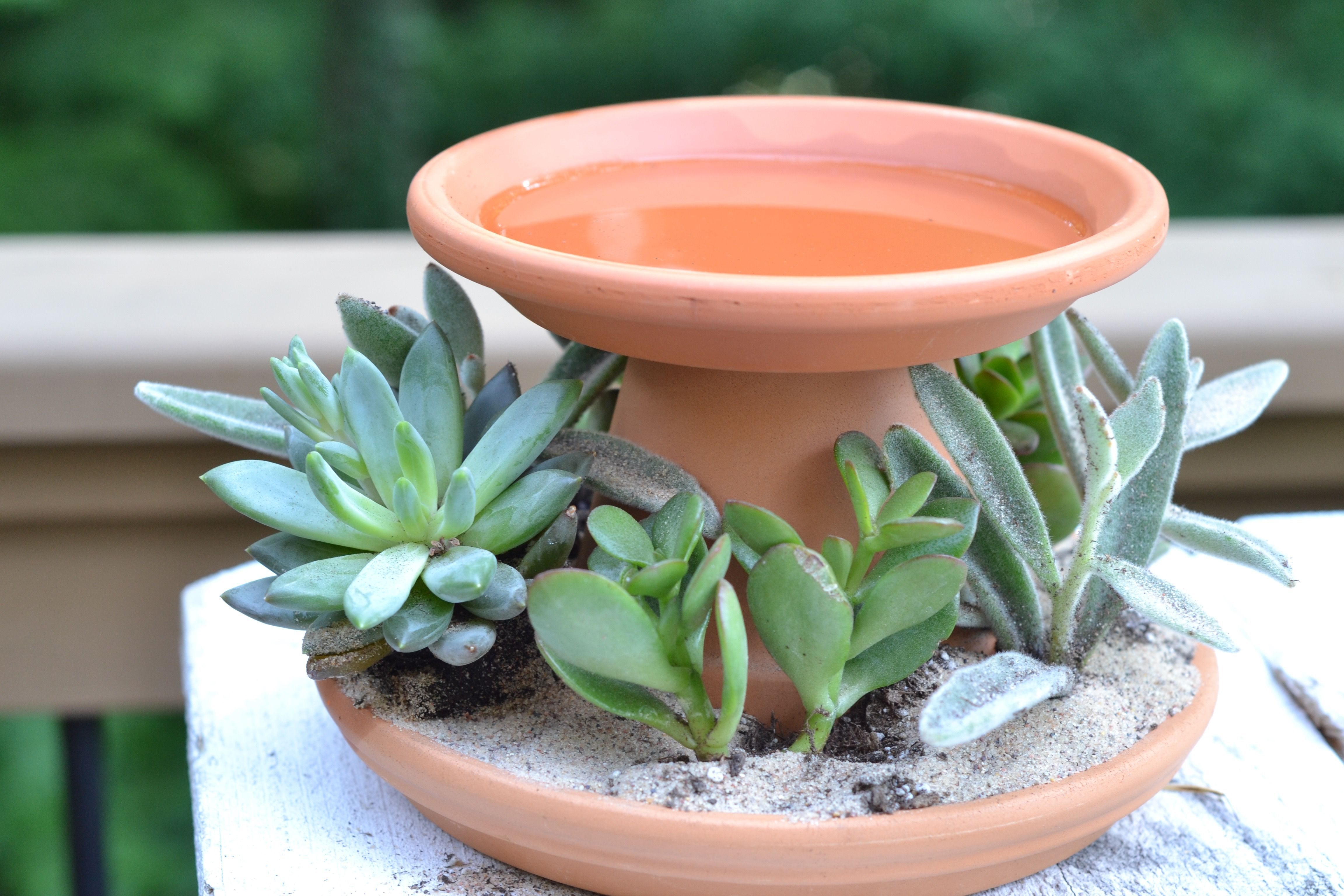 Planters & Bird Baths Create your own succulent planter that can serve as a bird bath, candle holder or trinket tray. The fantastic project comes with terra cotta pots and dishes, 4 succulent/cacti plants, sand, soil, actiCreate your own succulent planter that can serve as a bird bath, candle holder or trinket tray. The fantastic project comes with...