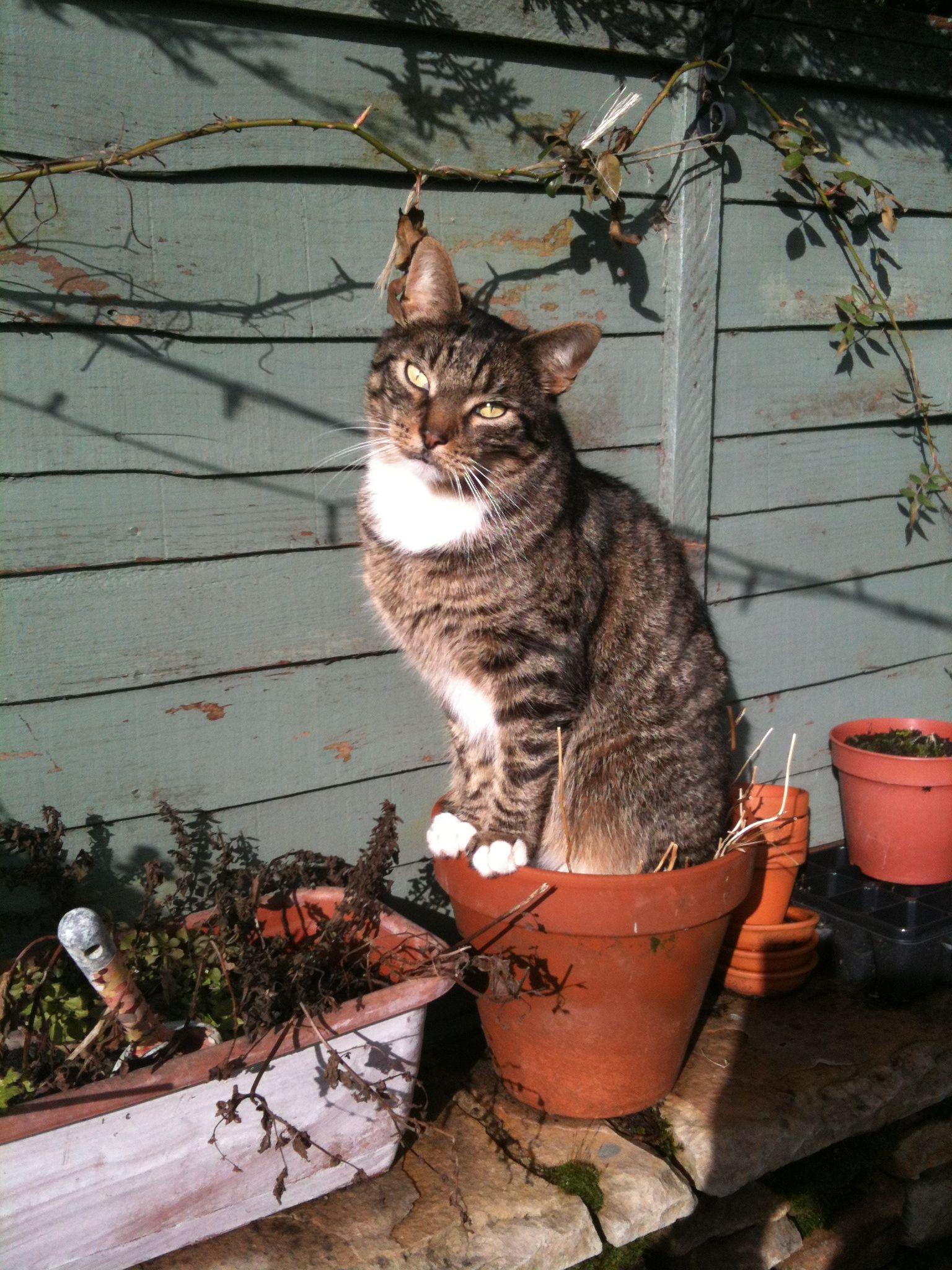 Diesel Dendrum Cats Cat Life Animals