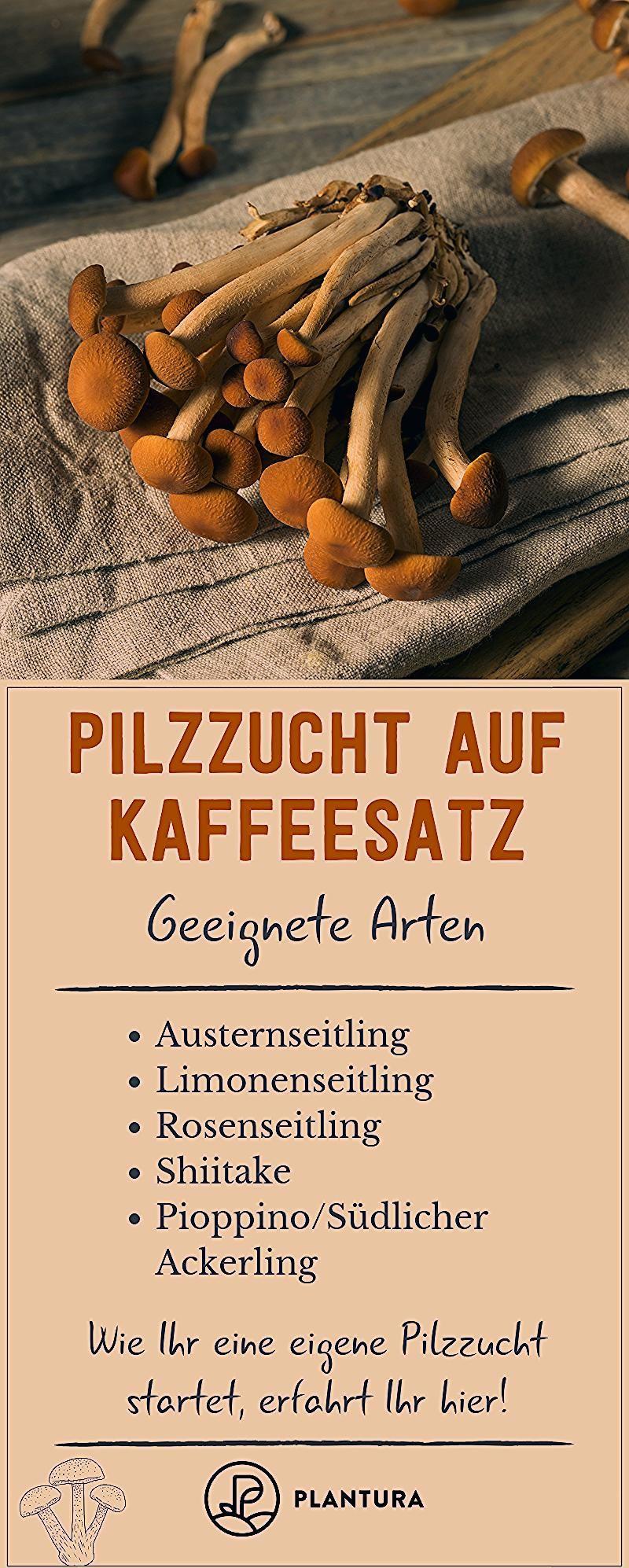Photo of Pilzzucht auf Kaffeesatz: Speisepilze aus der eigenen Küche – Plantura