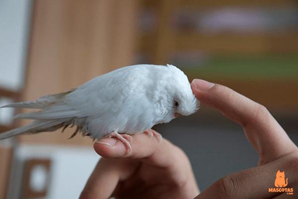 Wdr Tiere Suchen Ein Zuhause Heute