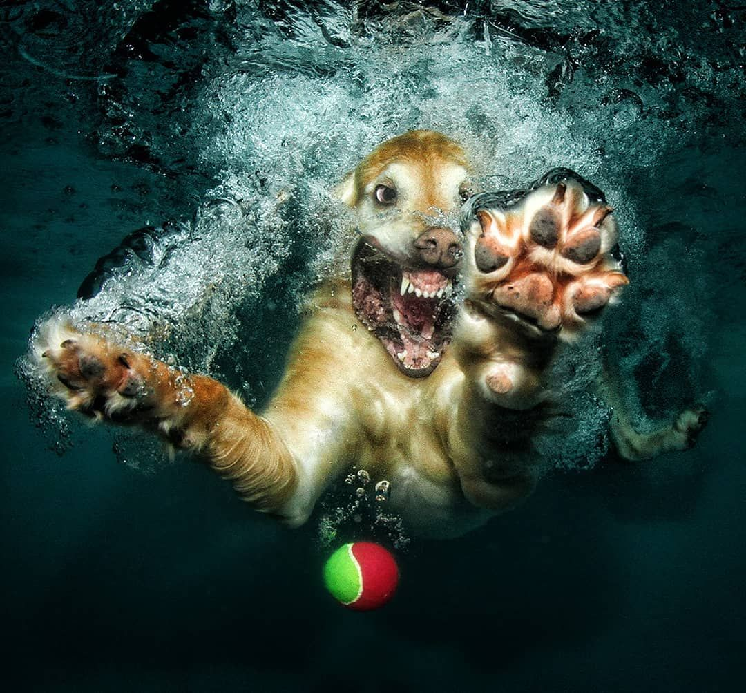 Underwater Dogs: Creative and Playful Photography by Seth ...