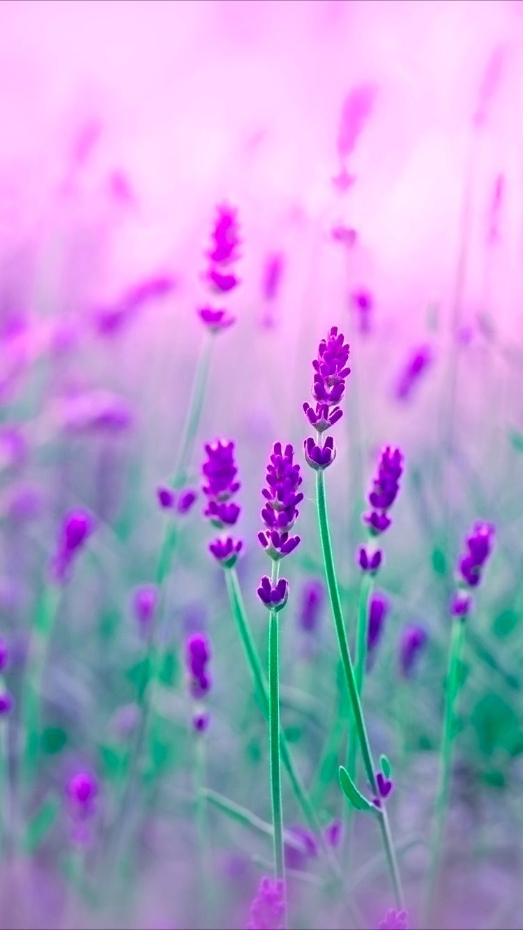 Tap To Get Free App Purple Flowers Wallpaper For Your Iphone 8 From Everpix App Flores Roxas Flores Fotografia Papel De Parede Roxo
