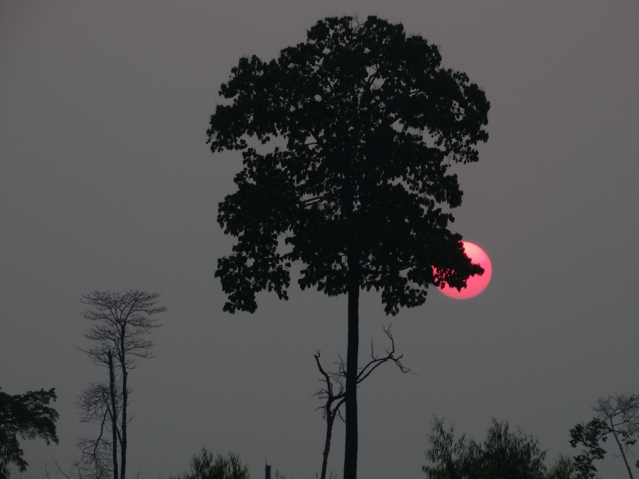 Anoitecer amazônico - Dusk Amazon. - Image no edition.