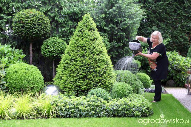 Galeria Zdjec Bukszpany W Ogrodzie Front Yard Landscaping Design Victorian Gardens Landscape Curbing