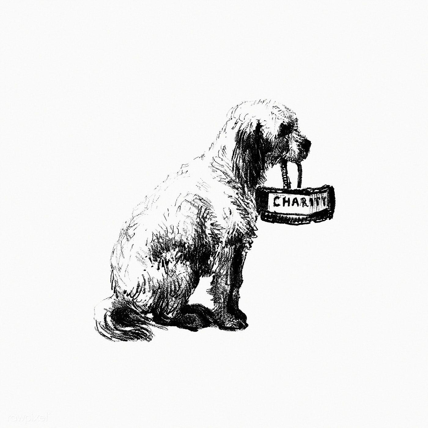 Vintage European Style Dog Engraving By Philozoia Or