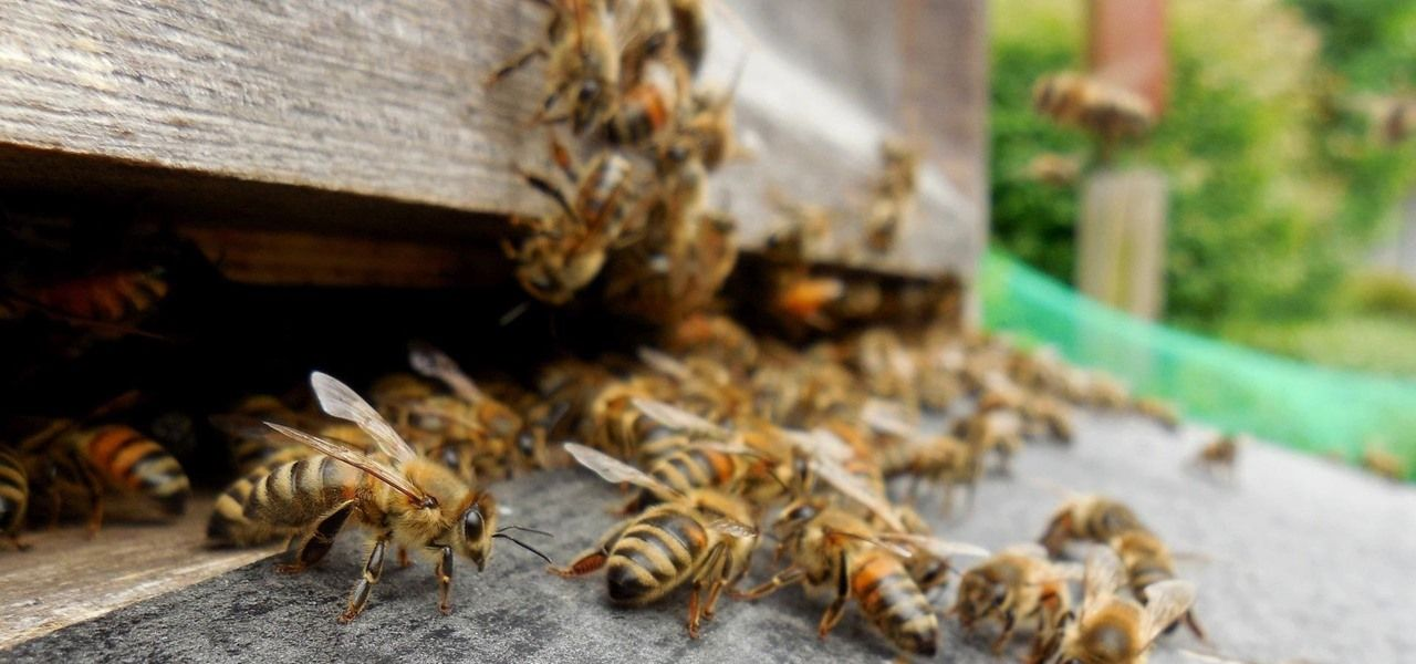 Antibiotics Could Be Contributing to Dramatic Drop in Bee Populations https://www.invisiverse.com/news/antibiotics-could-be-contributing-dramatic-drop-bee-populations-0176518/?utm_campaign=crowdfire&utm_content=crowdfire&utm_medium=social&utm_source=pinterest