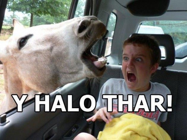 Funny Memes For Kidd : Best dance memes images ballet dance ballet