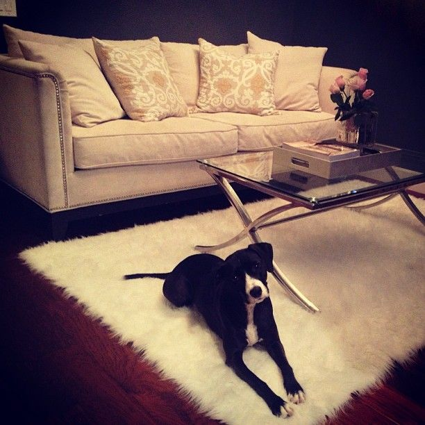 Z Gallerie Duplicity Coffee Table: @AWastedMemory Shows Off Her Pup-approved Beautiful Z