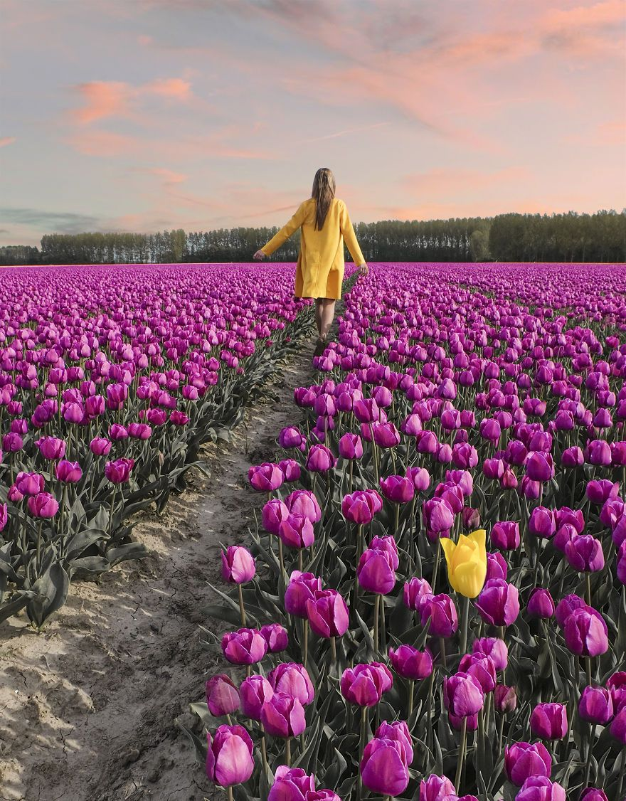 We Captured The Incredible Transformation Of The Netherlands When All 7 Million Tulips Bloom At Once Tulip Fields Netherlands Tulips Tulip Fields