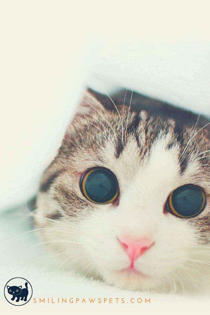 Hello :3