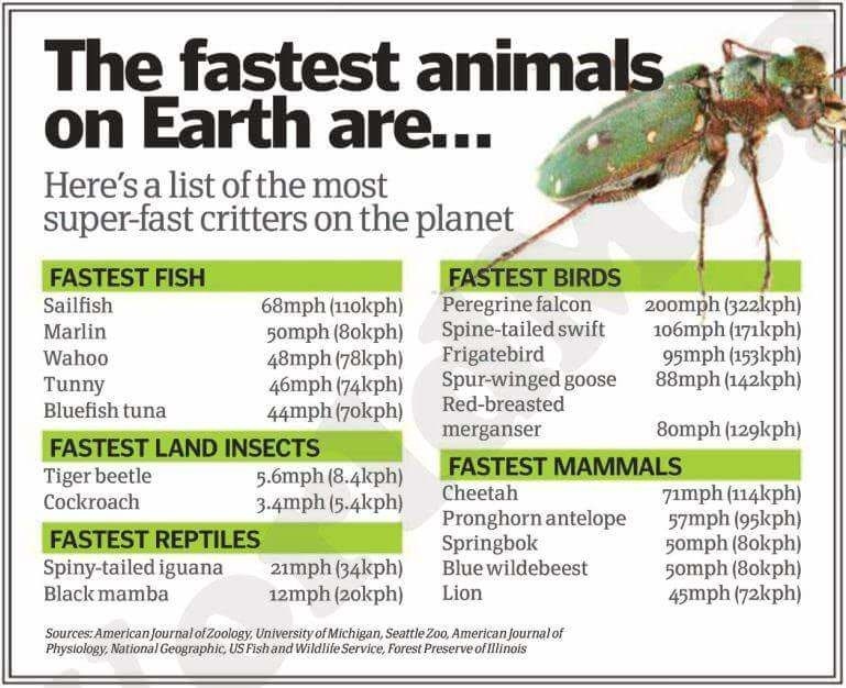 14+ Whats the fastest animal in the world ideas