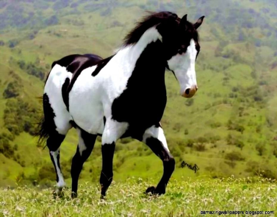 Black And White Paint Horse Wallpaper
