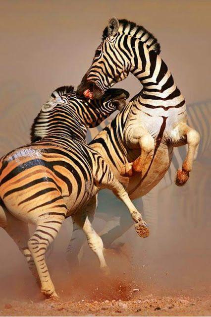 Beautiful Animals and Pets. – Gyűjtemények – Google+