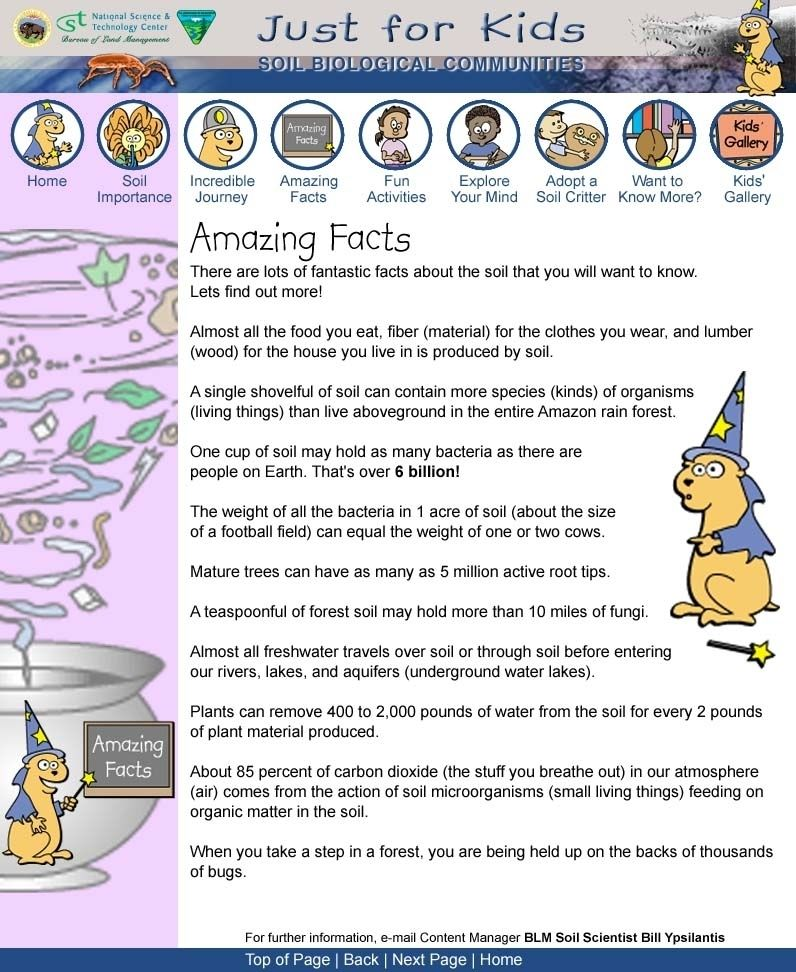 Just For Kids Amazing Facts Fun Facts About Earth Fun Facts Facts