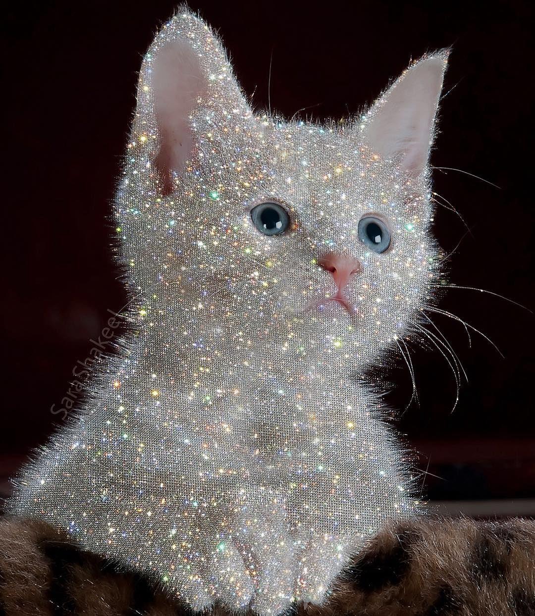 мама картинки с котятами блестяшки самом