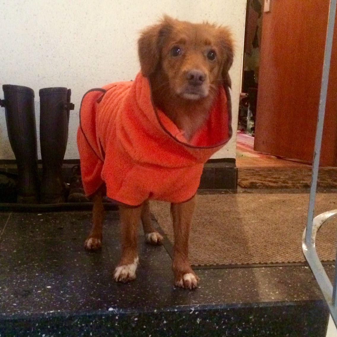 Hunde Bademantel Frottee Orange Braun Hunde Mantel Hunde Frottee
