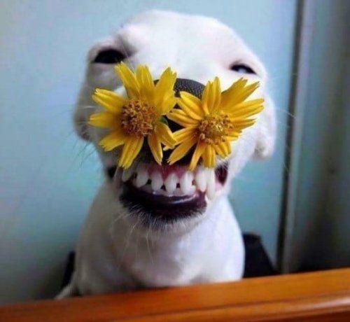 Новые картинки с приколами | Милые собаки, Счастливые ...