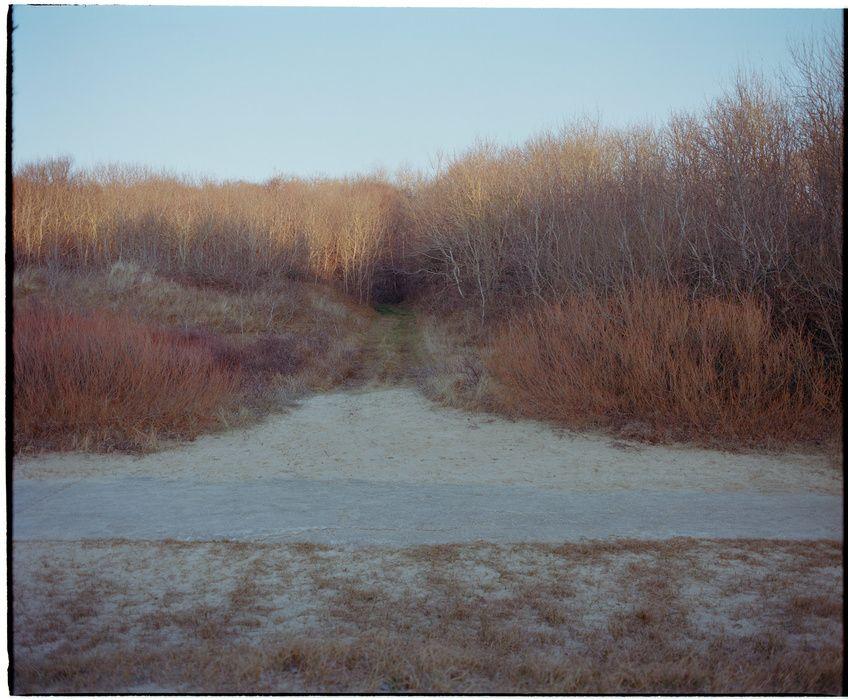 Julie Labarre Boileau - Forests & Trees