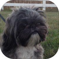 Free Iphone App Shih Tzu Fans If You Have A Shihtzu