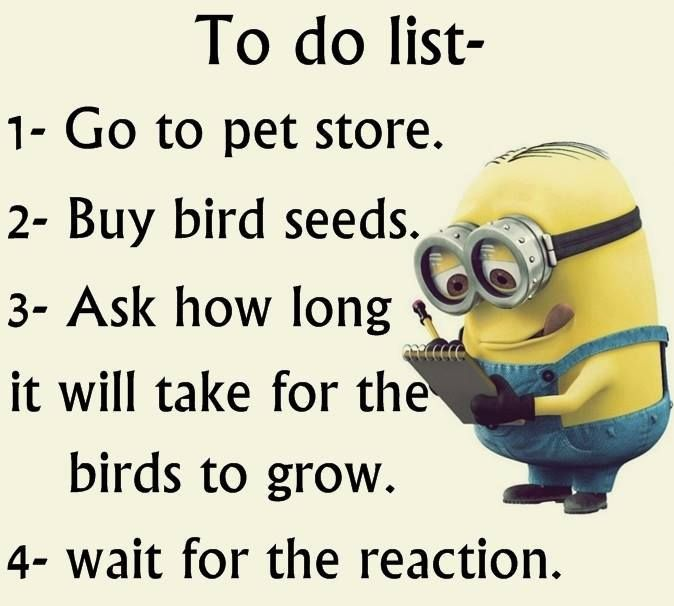 Funny To Do List Meme : Bird seed humor pinterest funny minion and