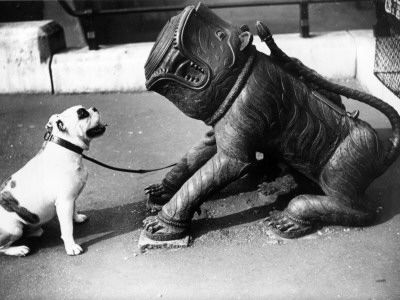 Bulldog In 1938 This Is How They Are Really Supposed To Look