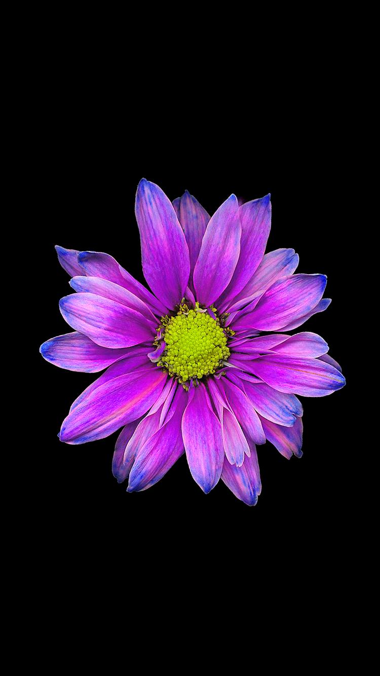 уверенности картинки цветка как на айфоне под