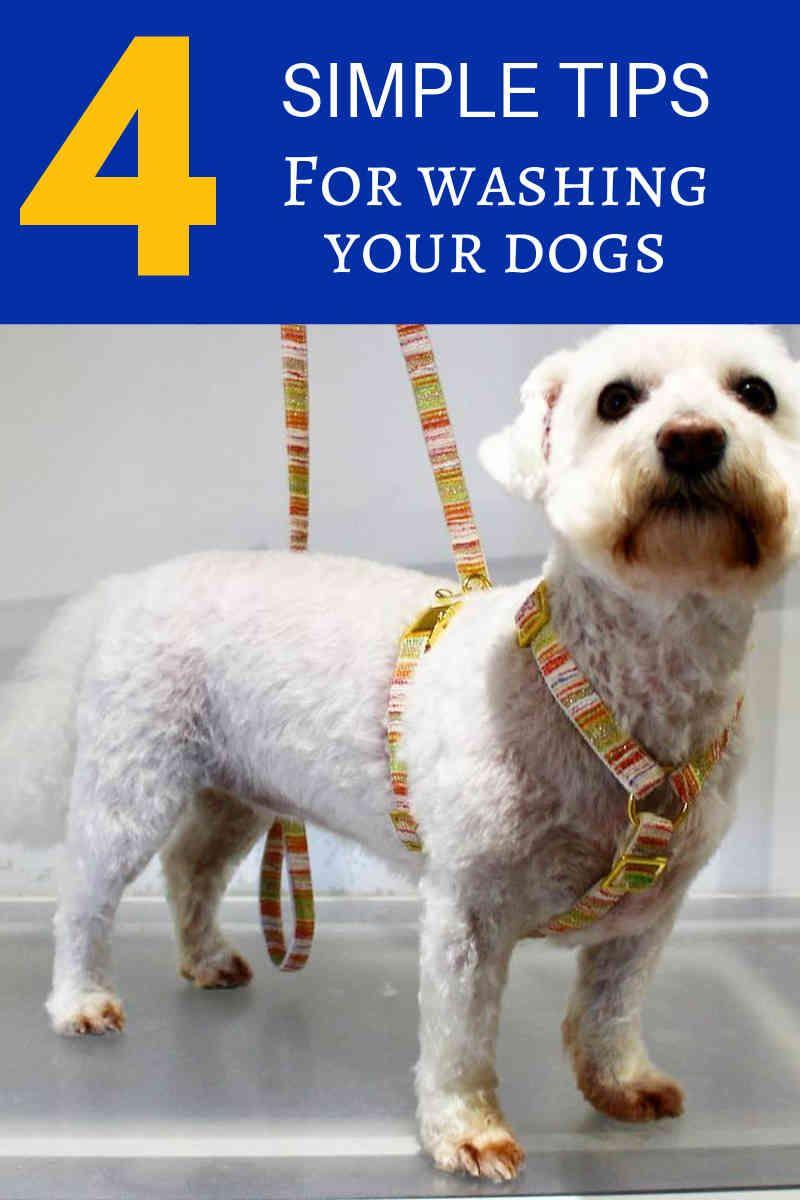 5 Dog Grooming Tips For Healthy Fur Teeth Ears And Nails Dog Grooming Dog Grooming Tips Dog Groomers