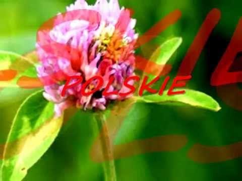 Polskie Kwiaty Wyk Justyna Steczkowska Flowers Poppies Sunflower