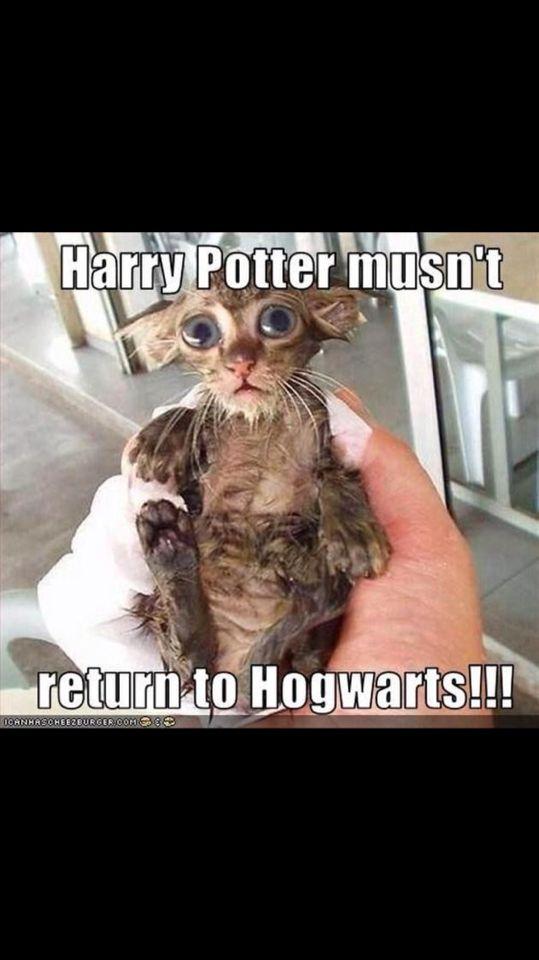 I Need This Cat Harry Potter Jokes Harry Potter Funny Harry Potter Memes