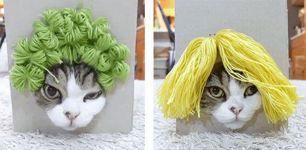 Sensacional simulador de peinados Galería de tendencias de coloración del cabello - Simulador de peinados para gato   Gatos, Animales, Tipos ...