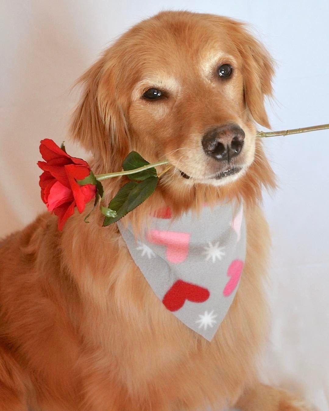 найдете все картинка собачка с цветком в зубах этом даже