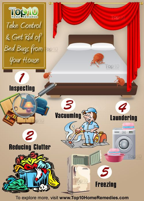 Here's How To Take Control Get Rid Of Bed Bugs From Your House Enchanting How To Get Rid Of Spiders In Bedroom
