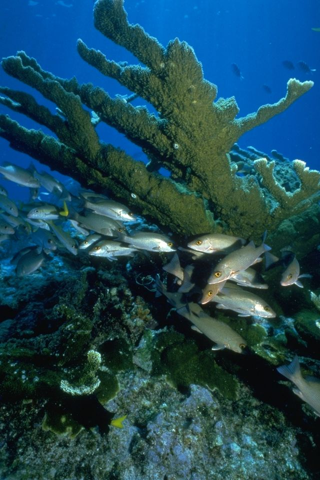 Miami Area Beach Photos C Reefs