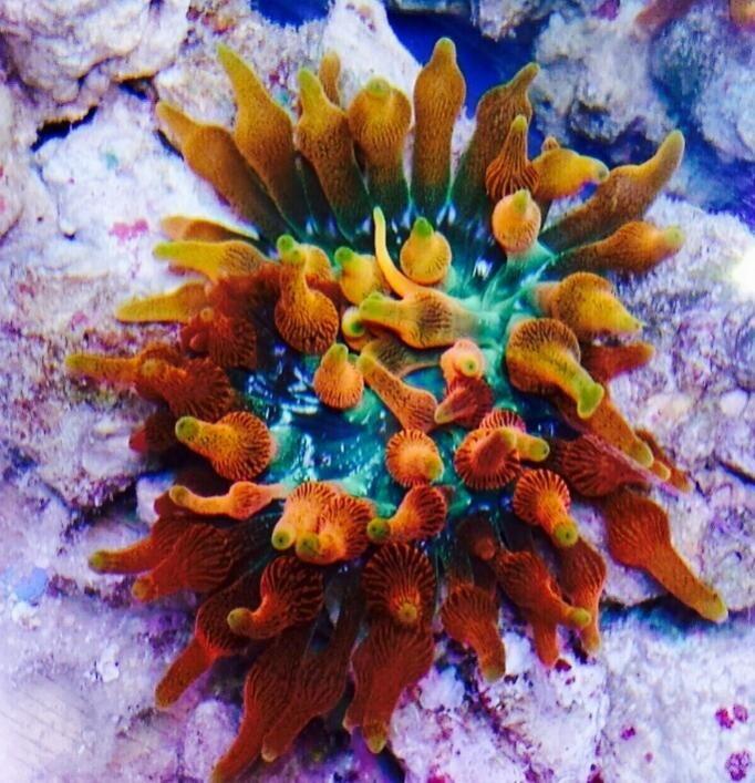 Pin On Current Aquarium Stock