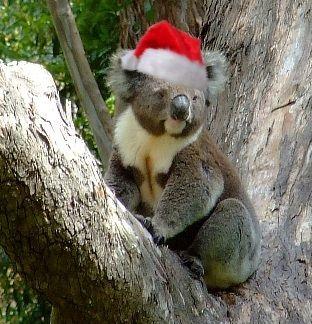 found this adorable picture :) | Koala Bears | Pinterest ...