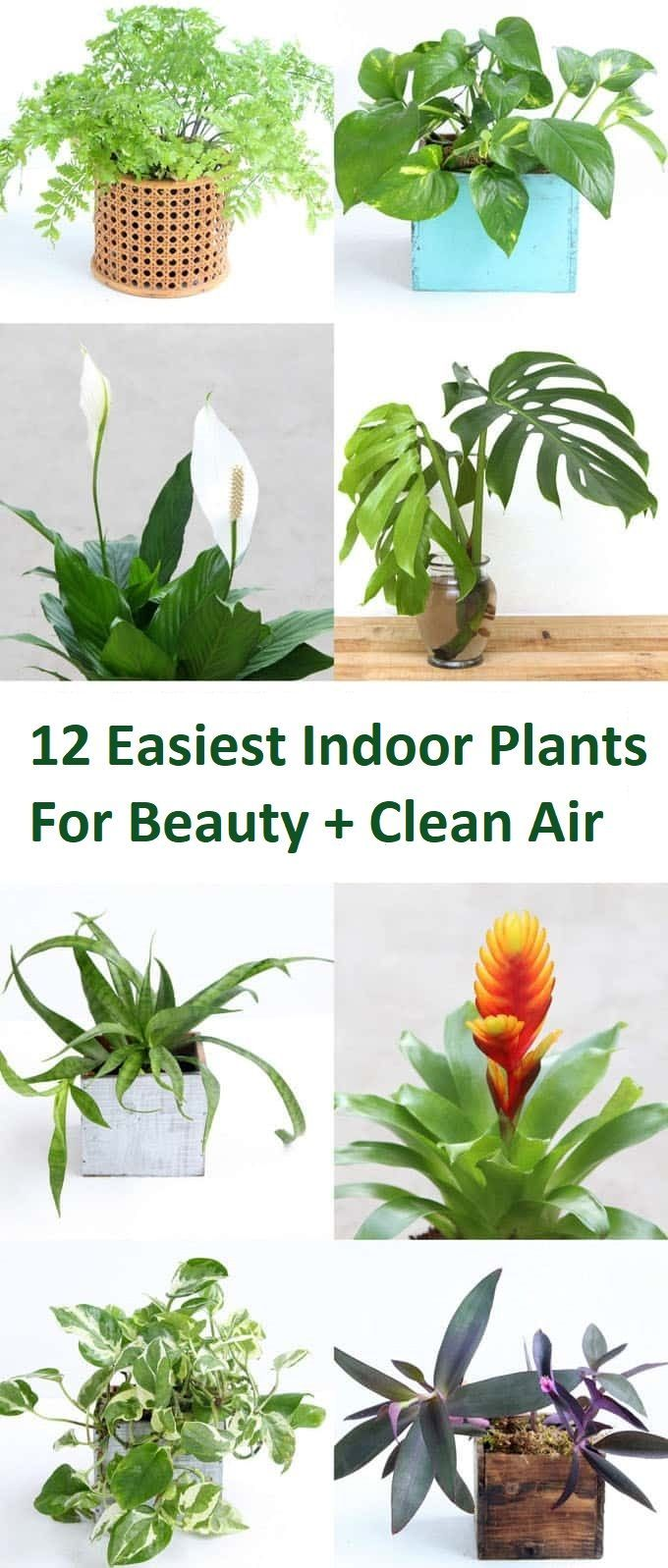 Easiest Indoor Plants For Beauty Clean Air Air Purifying Plants Nasa Best Indoor Plants For Air Purifi Plants Hanging Plants Indoor Indoor Plants Clean Air