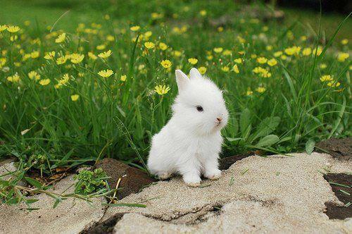 Fluffy Baby Bunny
