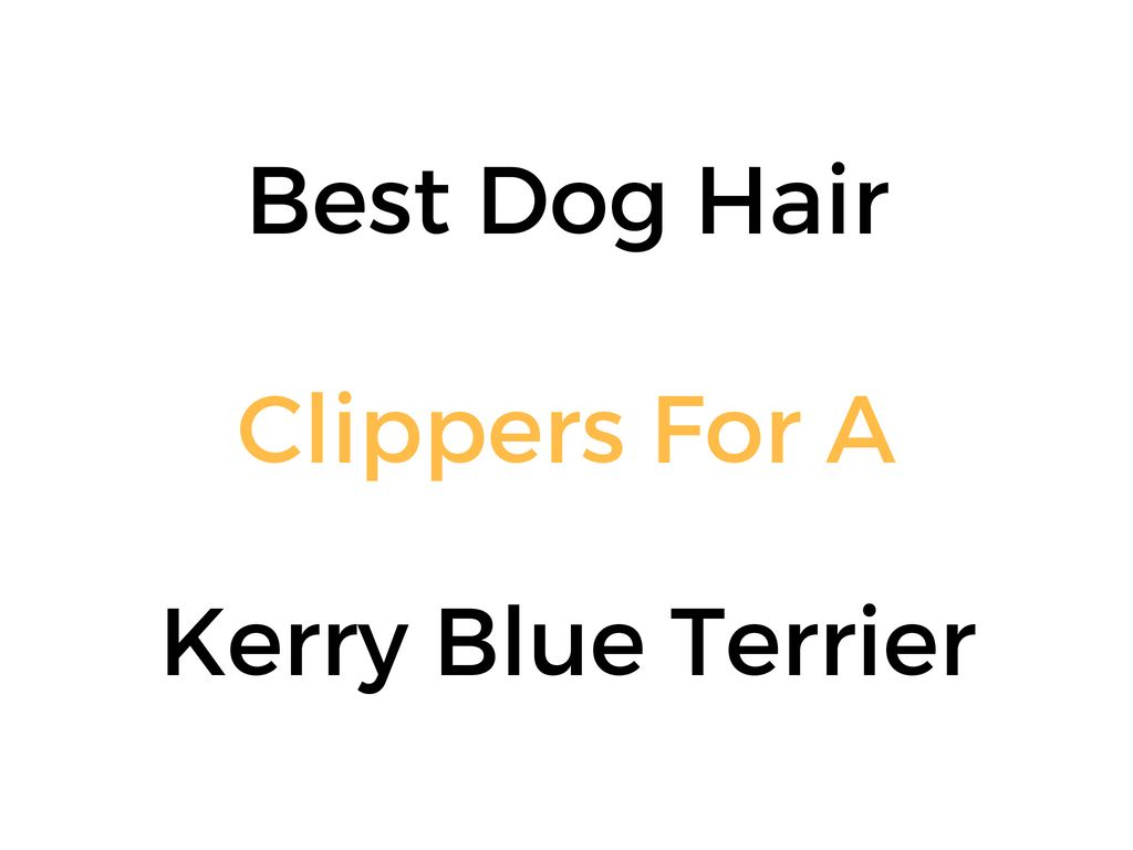 Best Dog Hair Grooming Clippers For A Kerry Blue Terrier Kerry Blue Terrier Dog Hair Grooming