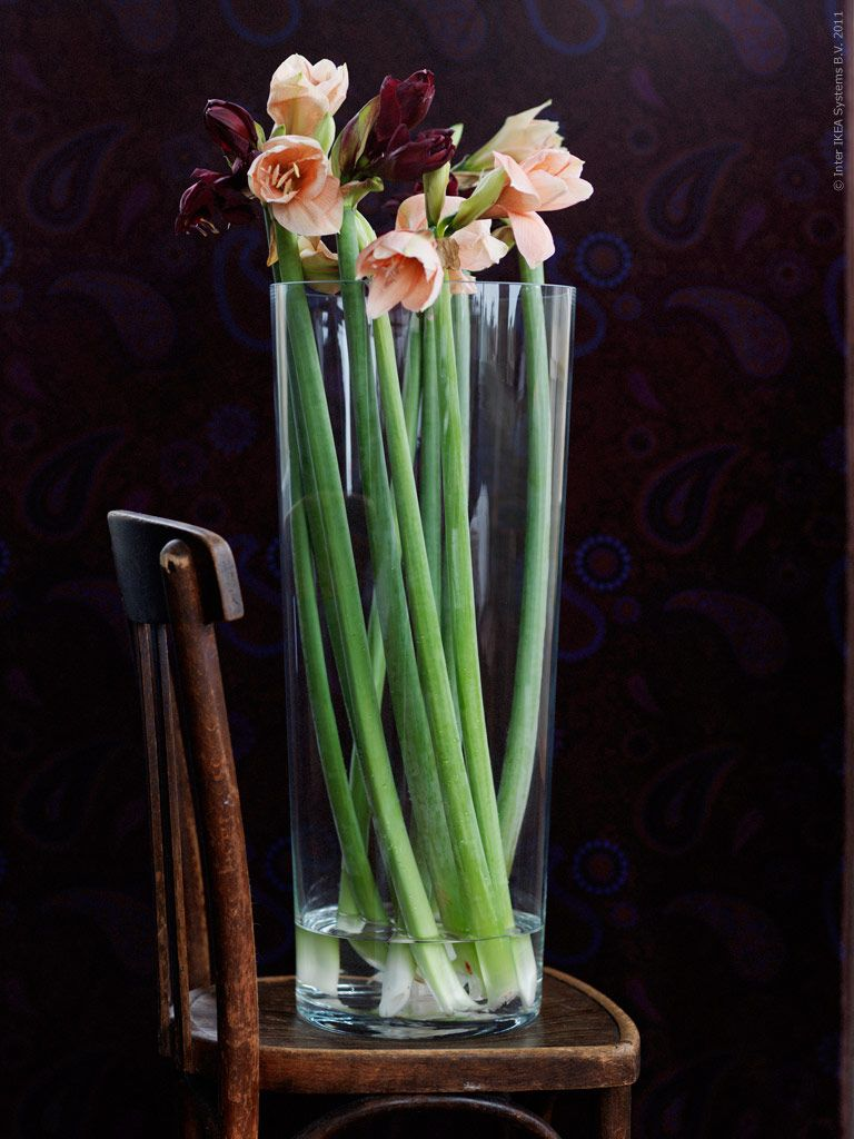 Vi har sagt det förut – vackra blommor är lite som konst, de tillför liv och sätter stämningen i hemmet. Inte minst i juletid! En konst är att ge dem den där inramningen som får dem att riktigt blomma ut. Mörkröd och persikotonad amaryllis i BLADET vas klarglas.
