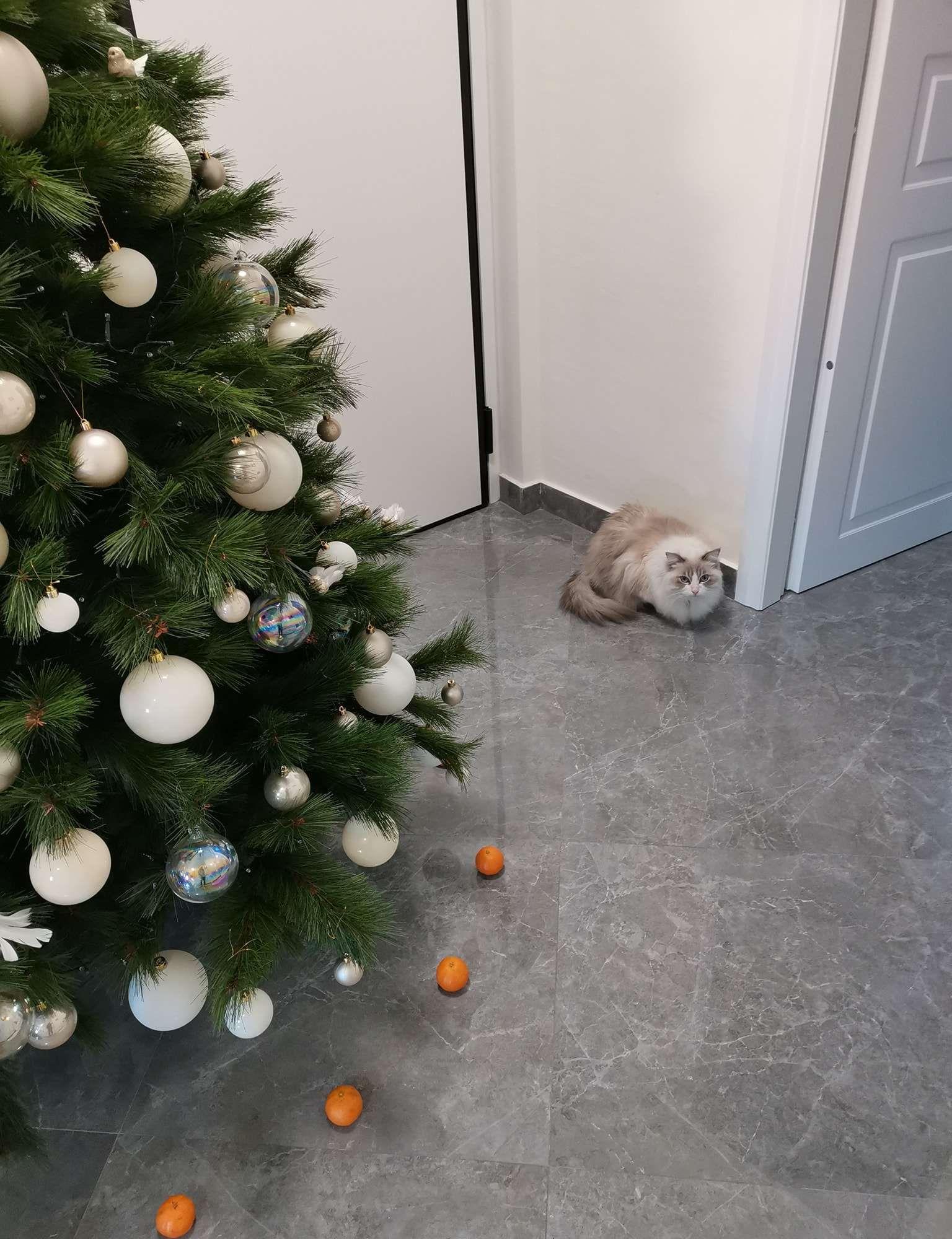 Cat Won't Destroy Christmas Tree Because Of Tangerine