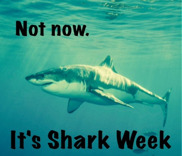 How To Celebrate Shark Week With Images Shark Week Memes
