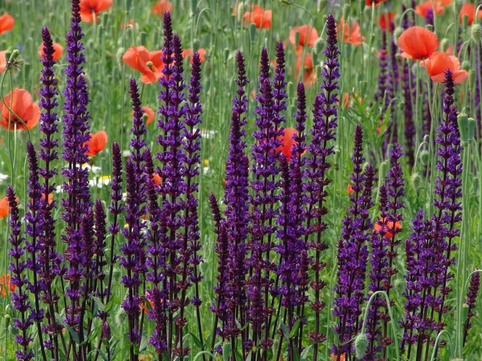 Flowers That Attract Butterflies. Shade GardenGarden ...